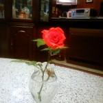 いきなり庭に咲いた、季節外れの朱赤のミニバラ